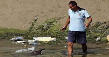 Adana'da vahşet! Sulama kanalında at ve eşek kemikleri bulundu