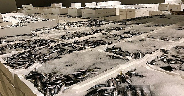 İstanbul'da 90 ton istavrite el konuldu