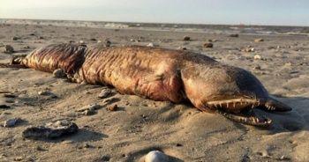 Kasırga gizemli canlıyı sahile getirdi