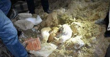 Köpekleri canice öldüren şahıs hakkında işlem başlatıldı