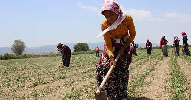 Kadınların 45 derece sıcakta ekmek parası mücadelesi