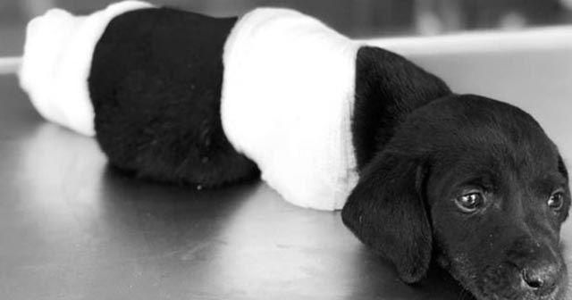 Yavru köpek vahşetinde bir kişi gözaltına alındı!