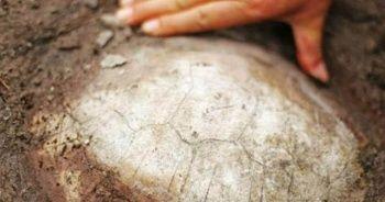 Çin'de bulundu! Tam 150 milyon yıl öncesine ait