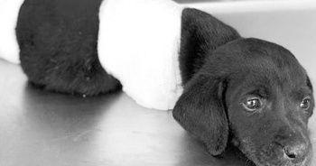 Köpeğe zarar verdiği iddia edilen operatör konuştu