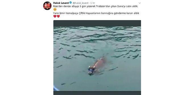 Denizde yüzerken bulunan danayı Haluk Levent satın aldı