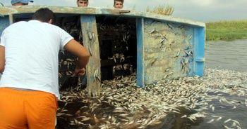 Hatay'daki balık ölümleri korkuttu
