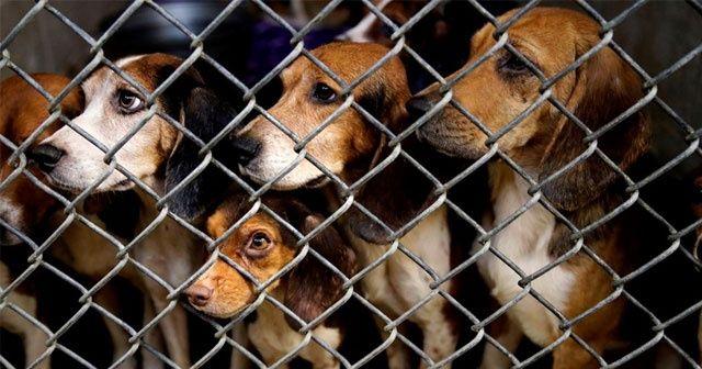 71 köpek ölmek üzereyken kurtarıldı