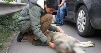 E-5'te yürekleri sızlatan an! Uzun uzun baktı, kucağına aldı, sarıldı, öptü...