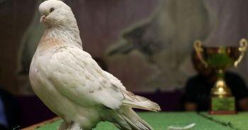 Güvercinine karşılık otomobil teklifini reddetti, 100 bin lira istiyor