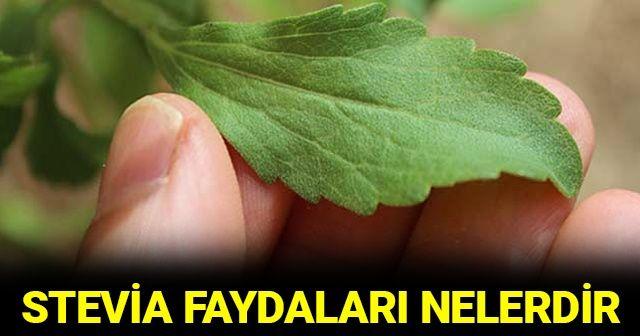 Stevia bitkisinin faydaları nelerdir