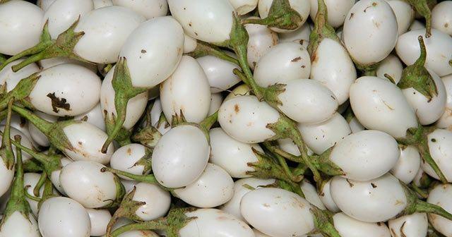 Yumurta çiçeği beyaz patlıcanın faydaları