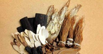 Ginseng nedir ne işe yarar faydaları nelerdir