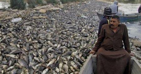 Tonlarca balık ölü olarak olarak bulunmuştu! Nedeni belli oldu
