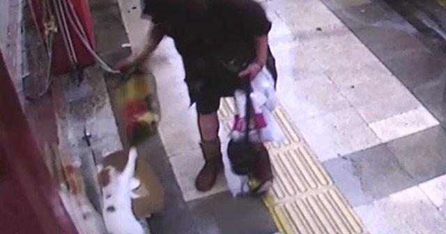Kediye vurup battaniyesini çalan vicdansız kadın