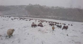 Ardahan'da kar yağışı çobanları zor durumda bıraktı
