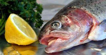 Balık zehirlenmesi belirtileri nelerdir, Balık zehirlenmesi tedavisi ne iyi gelir