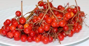 Bu meyve kansere karşı koruyor (Gilaburu meyvesi nedir? Gilaburunun faydaları nelerdir?)
