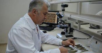 Karadeniz'deki 2 balık türünde parazit tespit edildi