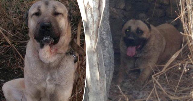 Burdur'da şok iddia! 3 köpek bu halde bulundu