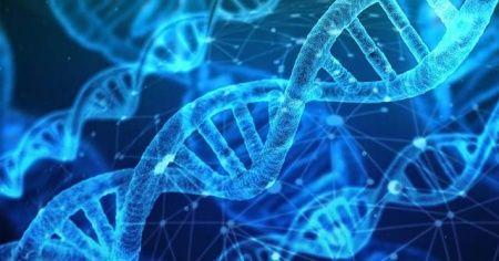 DNA yaşam süresi hakkında ipuçları veriyor