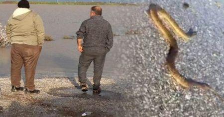 Sular çekildi kabus başladı! Her yeri yılanlar sardı...