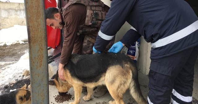 Hakkari'de sokak hayvanlarına kuduz aşısı