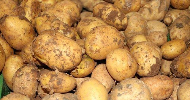 Tanzim satışlara patates Niğde'den gelecek