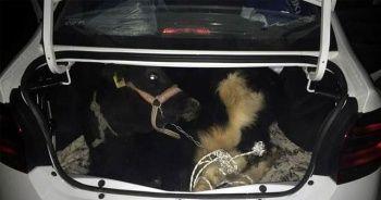 Otomobilin bagajından çıkan şey polisleri bile şoke etti