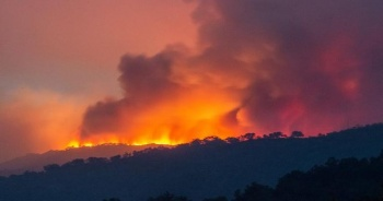 Yeni Zelanda'daki orman yangınında acil durum ilan edildi