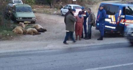Otomobilin çarptığı 17 koyun telef oldu