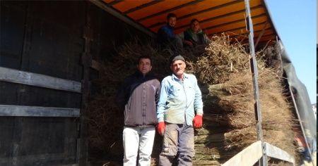 Ceviz üretiminde büyük başarı: Günde 5 tır ihracat