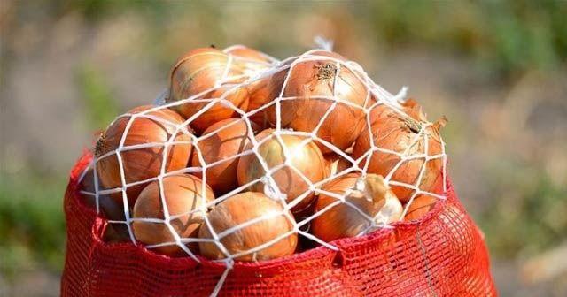 'Nisan sonunda soğan fiyatının 1-1,5 lira olması bekleniyor'