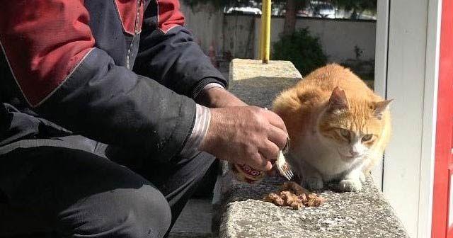 Atatürk Havalimanı'nda hayvanlar da taşınıyor