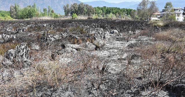 Köyceğiz'de otluk yangınında 8 dönüm alan zarar gördü