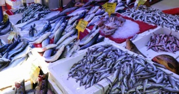 Balıkçılar sezondan memnun
