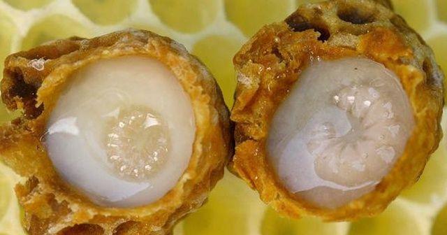 Arı sütünün kilosu 20 bin liraya satılıyor