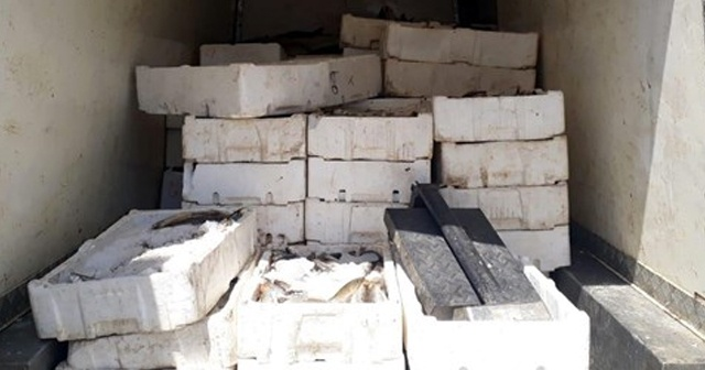 Kahramanmaraş'ta bin 800 kilo kaçak balık ele geçirildi