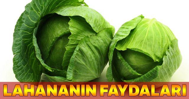 Lahananın Faydaları, Beyaz lahananın faydaları, Lahana zayıflatır mı?