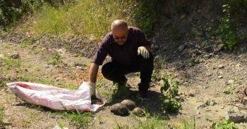Evinin bahçesine giren kaplumbağaları doğaya bıraktı
