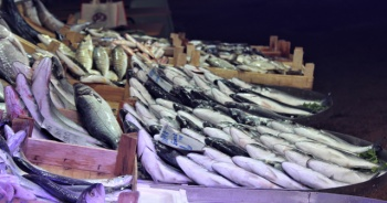Tezgahta kilosu 10 liraya balık var alan yok