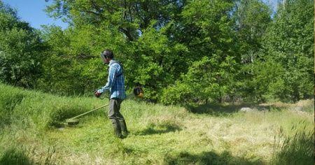 Dut bahçelerinde hasat hazırlığı