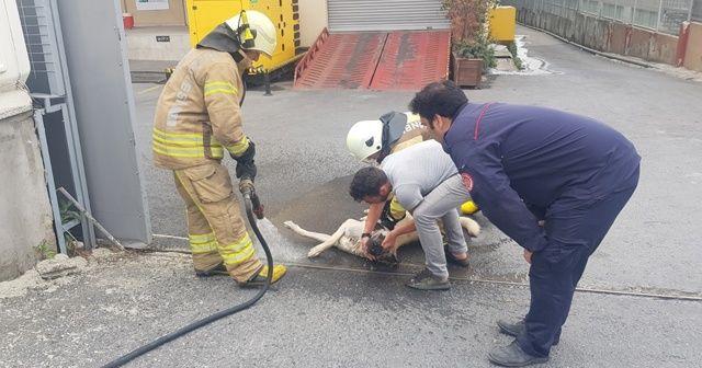 Kimyasal maddeden zehirlenen köpeği kurtarmak için seferber oldular