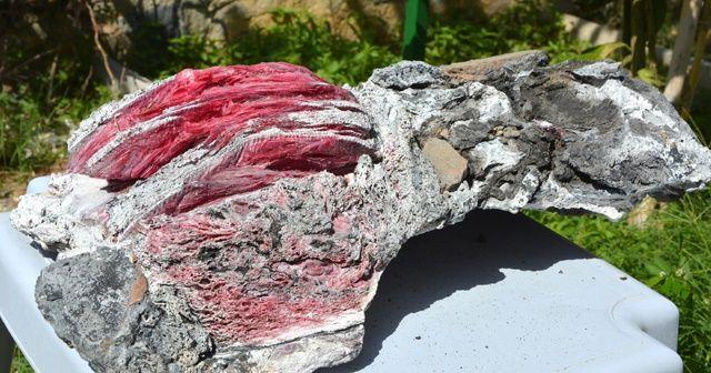 Muğla'dan bu kez 'fosil' çıkardı