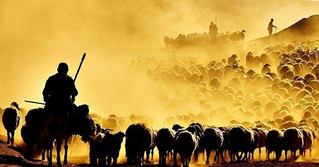 Nemrut Dağı'nda sürülerin tozlu yolculuğu