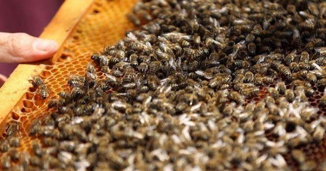Tunceli'de arı dehşeti! Ölü ve yaralılar var