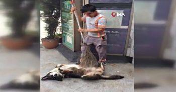 Belediye işçisi ile sokak köpeğinin iç ısıtan görüntüleri
