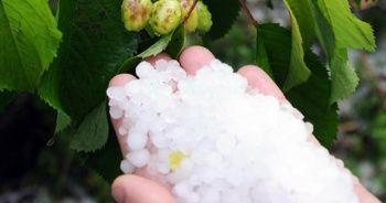 Mersin'de dolu yağışı meyve bahçelerini olumsuz etkiledi