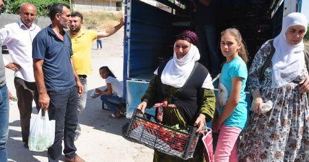 Kilosu 1 liradan satılan domatesten kasa kasa aldılar