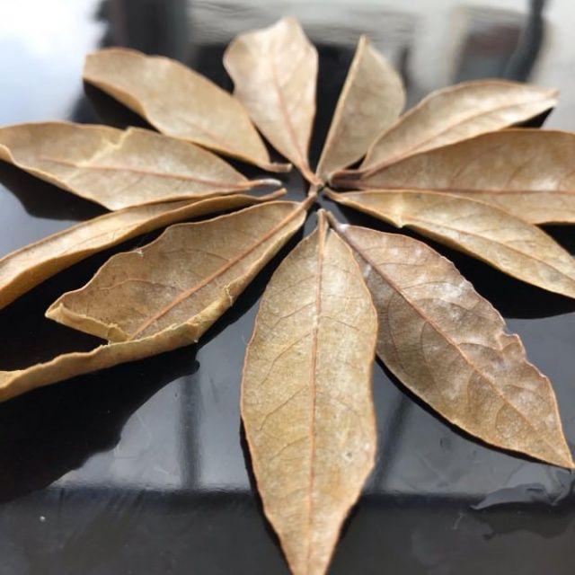 Defne Yaprağı Nedir? / Defne Yaprağının Faydaları Nelerdir? / Defne Yaprağı Nerede Satılır?