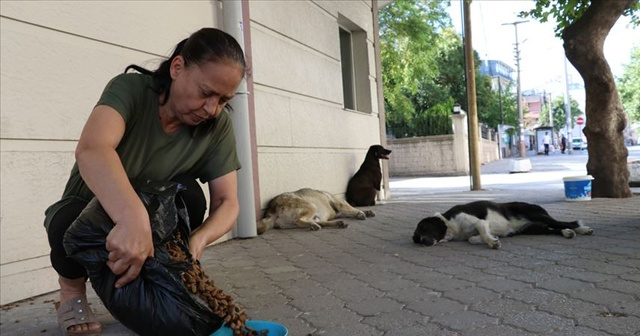 Emekli maaşını sokak köpekleri için de harcıyor